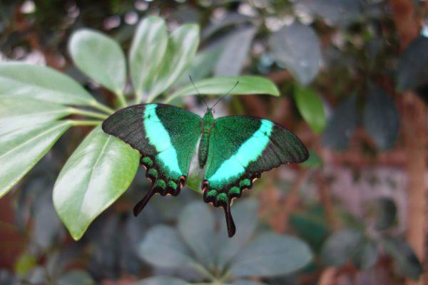 Ein Märchenhaftes Ausflugsziel – Schmetterlingshaus und Feengarten